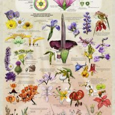 pitcher of flower identification guide