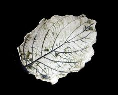 Only £24 (Free UK postage) - Green Dogwood clay leaf