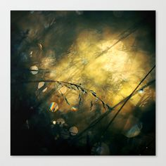 Lost Stretched Canvas by Pawel Matys - $85.00
