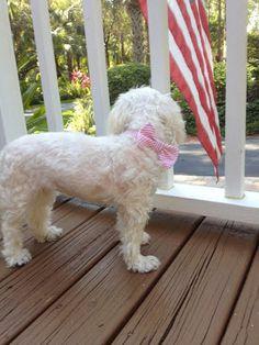 Devon Alana : DIY Preppy Dog Collar