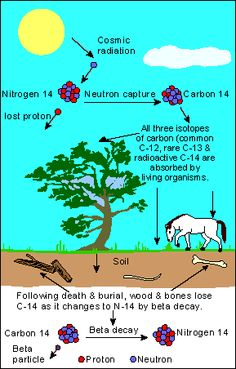 How is carbon 14 used in archaeological dating