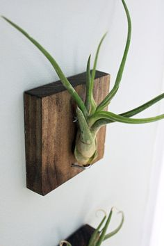 liking the idea of mounted air plants for my narrow wall bits. easy DIY.