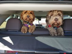 We're going to go help mommy catch fishies! Whew, I thought we were going to the vet. Sister, do you really think she'll catch something? Doodles, Board, Dogs, Animals, Animais, Animales, Animaux, Doggies, Animal
