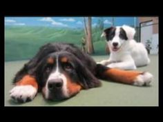 There are many new Dog Daycare San Diego services coming up in the market, dog day care is something that is creating all news in the market. There are many options coming up with time that is making dog day care so popular in the Canine Training San Marcos market. It is worth to have such services all hired recently.
