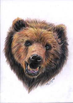 Grizzly bear by CsimmBumm