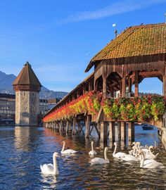 Chapel Bridge in Lucerne, Switzerland. Looks like it belongs in a fairytale. Built in 1333, it is the oldest covered wooden bridge in Europe. Inside you can find paintings dating back to the 17th century illustrating the history of Lucerne. Sadly, many paintings were destroyed in a fire in the 1990′s but you can still see around 25 original paintings.