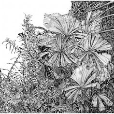 Botanical Plants by