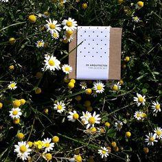 Esta tarde hemos sacado de paseo nuestros kits de cultivo🌼🌻🌼🌻 y a ésteblas flores silvestres le han hecho ojitos!😍😍 ahora todos a descansar!, felices sueños con olor a camomila!🌿🌼