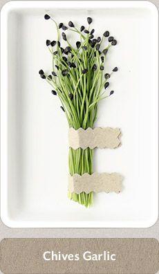Herbs Micro Herbs, Medicinal Plants, B & B, Fresh Herbs, Cupboard, Basil, Garden Ideas, Garlic, Tea