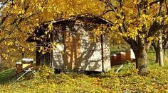 Herbst bei den Honig-Bienen und Honig Verkauf Blog, Plants, Honey Bees, Bees, Autumn, Blogging, Flora, Plant, Planting