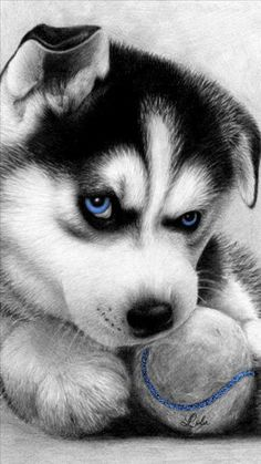 Wonderful All About The Siberian Husky Ideas. Prodigious All About The Siberian Husky Ideas. Cute Baby Animals, Animals And Pets, Funny Animals, Cute Husky, Husky Puppy, Cute Puppies, Cute Dogs, Dogs And Puppies, Doggies