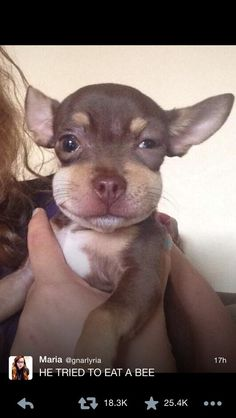 This puppy who ate his last bee. But it's so adorable cause he's A WITTLE PUPPY WHO LOOKS LIKE HE JUST TOOK BENEDRYL