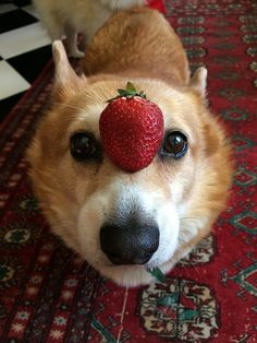 Things on Hazel's head: My assistant got his new phone to work, finally, and I got a piece of cheese again…. finally!