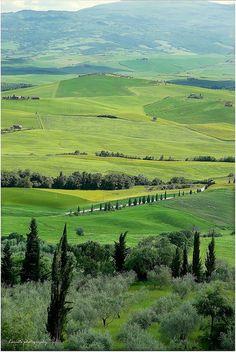 Toscana - green green grass