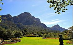 Visit the Kirstenbosch National Botanical Garden Explore the extraordinarily rich and diverse flora, your whole world will change at Kirstenbosch. I Cape Town National Botanical Gardens, Stuff To Do, Things To Do, Cape Town, My World, Golf Courses, Flora, African, Change