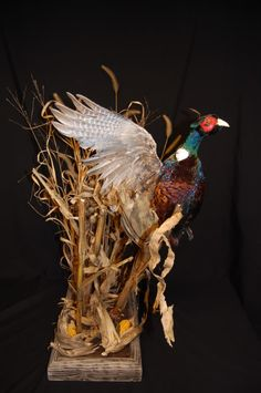 Just completed this Flushing Pheasant mount for 1 of my customers. Taxidermy Decor, Taxidermy Display, Bird Taxidermy, Pheasant Mounts, Pheasant Hunting, Waterfowl Hunting, Vintage Nautical, Wildlife, Hunting Stuff