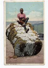 1900s Real Life Black Americana Postcard - Bale of cotton