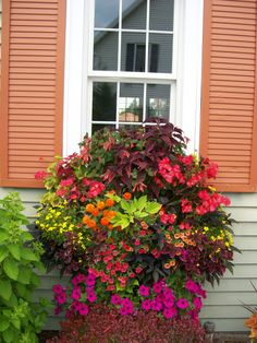 window box Vinyl Siding Hooks, Window Planter Boxes, Container Plants, Container Flowers, Container Gardening, Plant Containers, Window Box Flowers, Flower Boxes, Flower Ideas