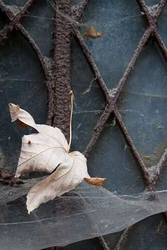 "~ Autumn ~ ""The last dead leaves of fall crackled underfoot, winter-crisp."