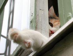 Curious Window Cat by Tomi Tapio, via Flickr