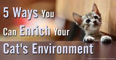 Through environmental enrichment, your cat's life can be same to that in the wild, so she will not feel like a captive animal and avoid any feline sickness. http://healthypets.mercola.com/sites/healthypets/archive/2011/10/20/your-cats-life-in-captivity-how-to-simulate-conditions-of-the-wild.aspx