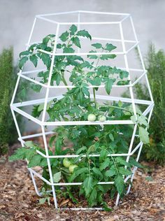 Sturdy, sculptural support for edibles like tomatoes, cucumbers, eggplant or ornamental plants. Set on flat, level garden earth or on patio surface with container plant. Beautiful sculptural effect. #terratrellis Wall Trellis, Vine Trellis, Garden Trellis, Tomato Trellis, Tomato Cages, Tomato Garden, Aquaponics Kit, Hydroponic Gardening, Organic Gardening