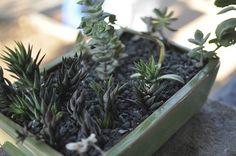 succulents, green ceramic planter