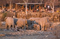 Halali CampIn an otherwise flat area Halali Camp is perched between a few hills and koppies. Thicker vegetation makes this popular with leopard, rhino and elephant. Situated halfway between Namutoni and Okaukuejo the Halali Rest Camp centrally located