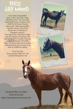 #MissJayWood Cutting Horse for Sale