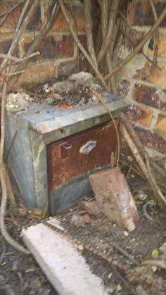 Bee removal in Johannesburg in Electric box