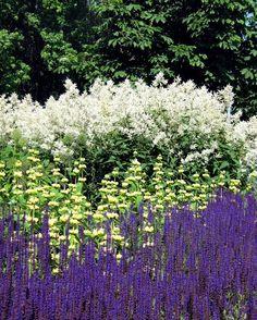 Душистый шалфей – фиолетовый цвет июля | блог дорис ершовой