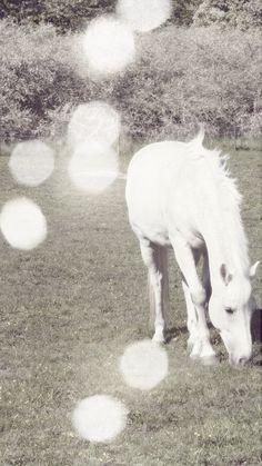 unicorn?