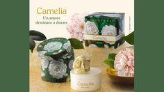 Camelia: un amore destinato a durare!