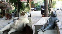 Szobrot kapott Isztambul ikonikus henyélő macskája - 444