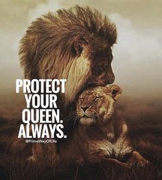 Positive Quotes : Protect your queen always. – Hall Of Quotes Lion And Lioness, Lion Of Judah, Badass Quotes, Best Quotes, Lion Quotes, Jolie Phrase, Lion Love, Amor Animal, Lion Wallpaper