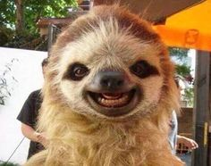Hey Sloth, Say Cheese
