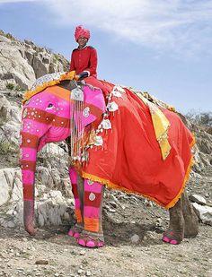 The Painted Elephants of Jaipur | Hint Fashion Magazine