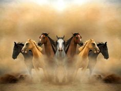 42 Graceful Photos Of Horses: Enjoy The Photo Contest Finalists Beautiful Arabian Horses, Most Beautiful Horses, Animals Beautiful, Simply Beautiful, Seven Horses Painting, Horse Canvas Painting, Horse Wallpaper, Painting Wallpaper, Photo Background Images
