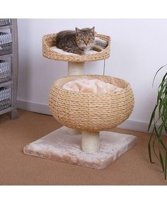 King of the jungle: Cat climbers to keep your feline friend entertained  | home sweet home lifestyle galleries feature  picture