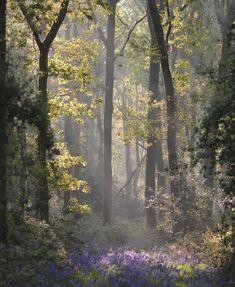 the forgotten realm — autumncottageattic: jasmineshiner Sunrise Drawing, Sunrise Painting, Sunrise Photography, Landscape Photography, Nature Photography, Sunrise City, Sunrise Wallpaper, Sunrise Pictures, Woodland Flowers