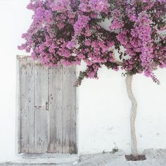 A simple pale grey door beside a lovely bougainvillea tree in Crete Bougainvillea Tree, Beautiful Places, Beautiful Pictures, Backyard, Patio, Windows And Doors, Colours, Instagram, Floral