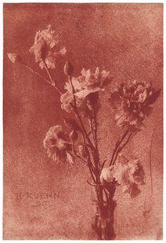 """Heinrich Kühn, Still Life with Carnations, 1896, gum bichromate print, 15 1/4"""" x 10 5/16"""""""