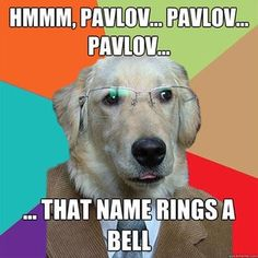Non-psych majors totally don�t get your ~hilarious~ jokes. | 21 Struggles Only Psychology Majors Understand
