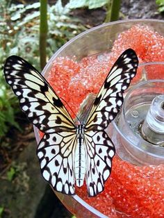 Types of butterfly with funny fact for kids - List of unusual and beautiful butterflies in the world, varies in patterns on the wings and color, butterflies with transparent wings, camouflage pattern.