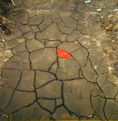 andy goldsworthy art - Google Search