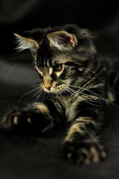 Phat kočička černá