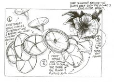 xxx Tutorial: Botanical drawing with pencil and watercolor, by Val Webb.