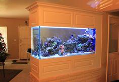 Yaratıcı Akvaryumlar #creative #aquarium #aquariumdecor #decor #akvaryum bitkiliakvaryum #akvaryum #bitkileri #interrior