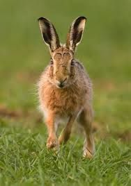 Never a bad hare day for me! Get it?? HARE DAY... Cause I'm a HARE! Lol!!!!