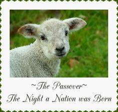 Bible Lessons for Kids: The Night When a Nation was Born